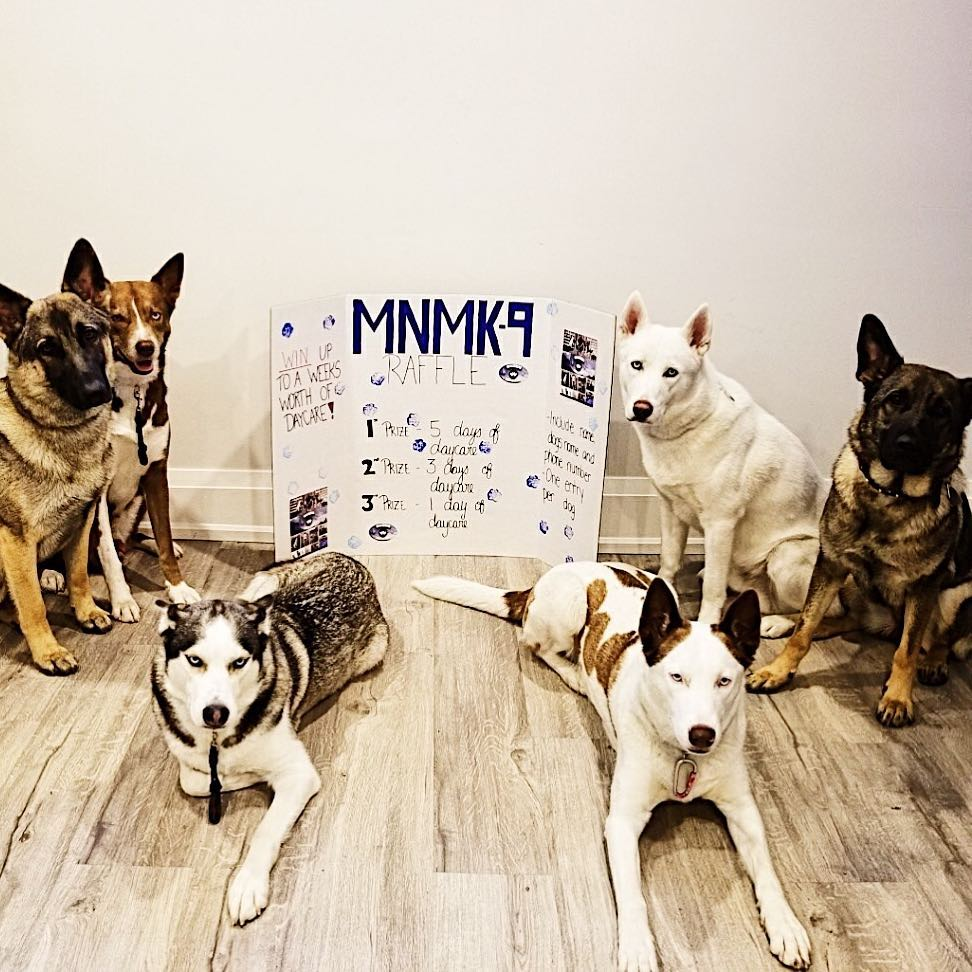 Four huskies and two shepherds posing in front of a MNM-K9 presentation board for a community raffle event.