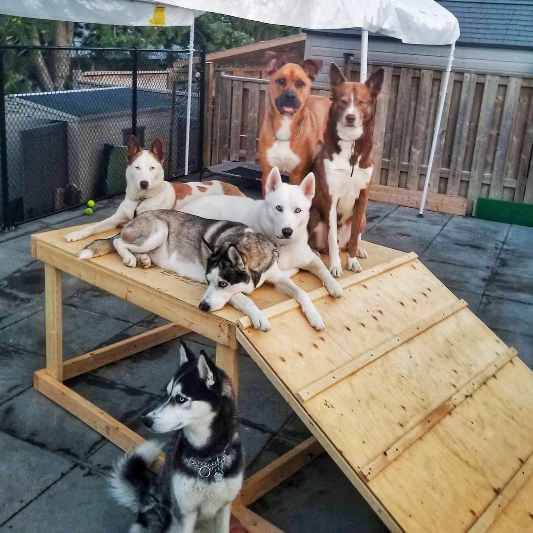 a group of dogs sitting on the top of a ramp posing for their next mixtape cover